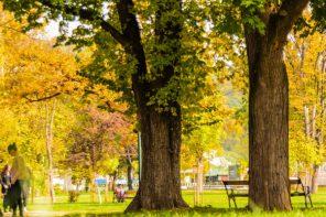 Naukowo potwierdzone: przebywanie na świeżym powietrzu sprzyja dobremu zdrowiu